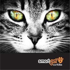 Cat Sitter | Babá De Animais | Pet Sitter | Táxipet