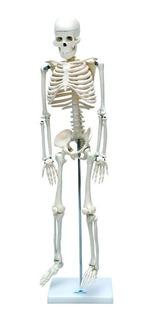 Esqueleto Humano Articulado De 85 Cm De Altura Com Suporte