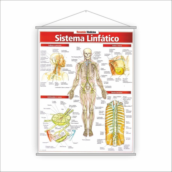 Banner Sistema Linfático - Resumão Medicina