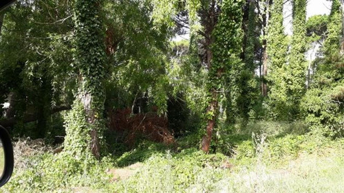 Imagen 1 de 9 de Terreno Con Proyecto En Carilo