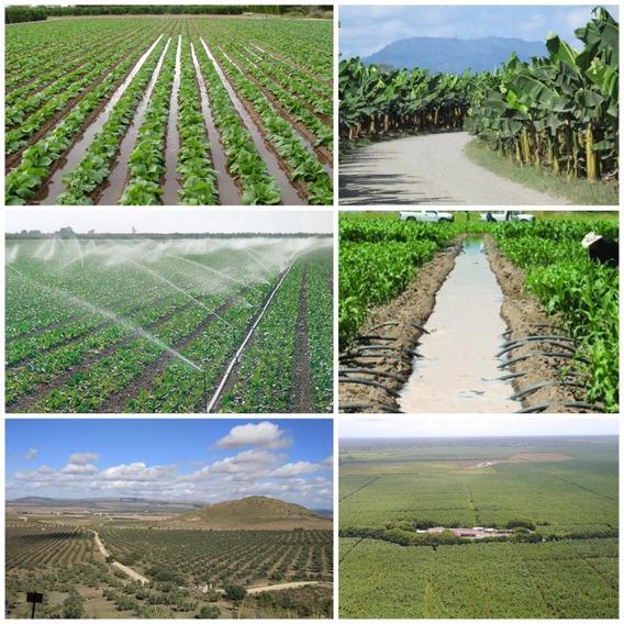 Barahona 100,000 Tarea Agricola Titulo Y Deslinde