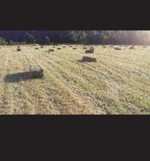 Fardo De Alfalfa