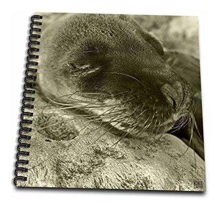 Kike Calvo Galapagos  Islas Galapagos Ecuador  Libro De Dibu