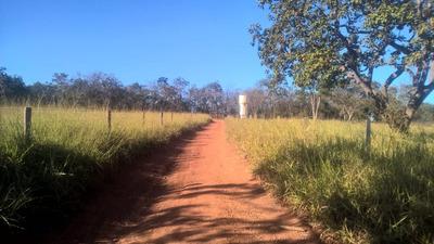Fazenda Na Região De Curvelo -mg,com 600 Ha , Perfil Para Gado , Topografia Plana, 9klm De Terra. - 4095
