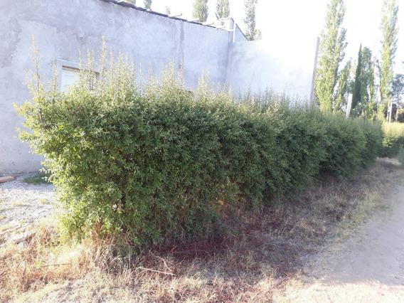 Vendo 2 Casas A Estrenar En Terreno De 900 Metros En San Rafael Mendoza