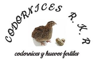 Venta De Codornices Y Huevos Fertiles