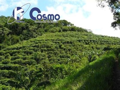 Fazenda Produtora De Café , A Venda, Localizada Entre Ibituruna E Bom Sucesso - Mg - Fa00009 - 32097688