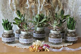 Suculentas Plantitas Matrimonio Baby Shower Bautizo Misa