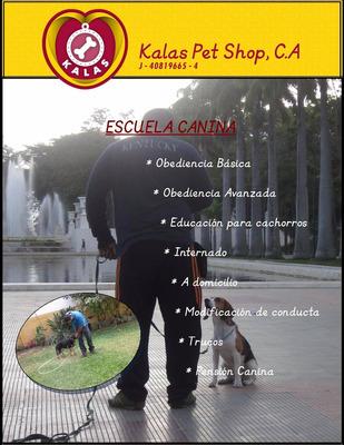 Adiestramiento Entrenamiento Escuela Canina Kala´s Dog