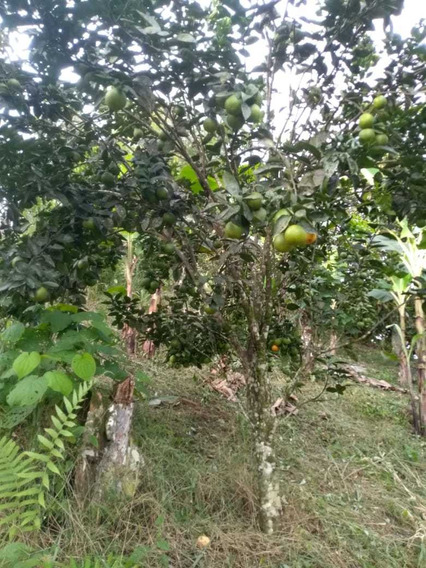 Vendo Terreno Santo Domingo De Los Tsachilas