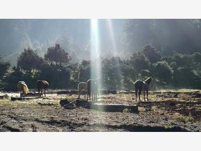 Terreno En Venta Tenemos El Mejor Lugar Para Ti En Lo Alto De La Montaña Enel Bosque