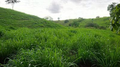 Finca Ideal Para Producción Agropecuaria Y/o Forestal