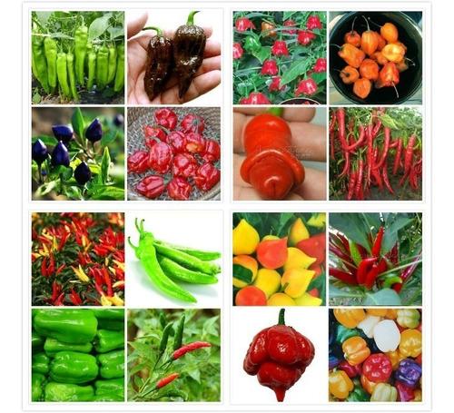 Kit  100 Sementes Variedades De Pimenta Raras