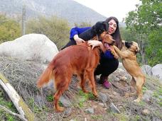 Hotel Para Mascotas Perros, Gatos Y Exóticos Vets&pets