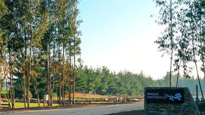Parque Maitencillo