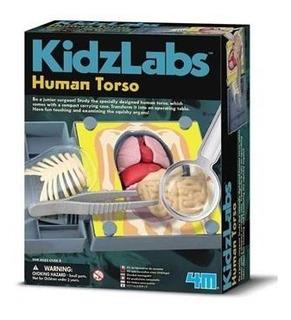 Kidz Labs / Human Torso Anatomy 1/6/36