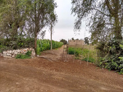 Vendo Terreno Agrícola En Esquivel Huaral