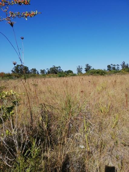 Excelente Terreno Dep Canelones De 28000 M2 (2.8 Hectarias)