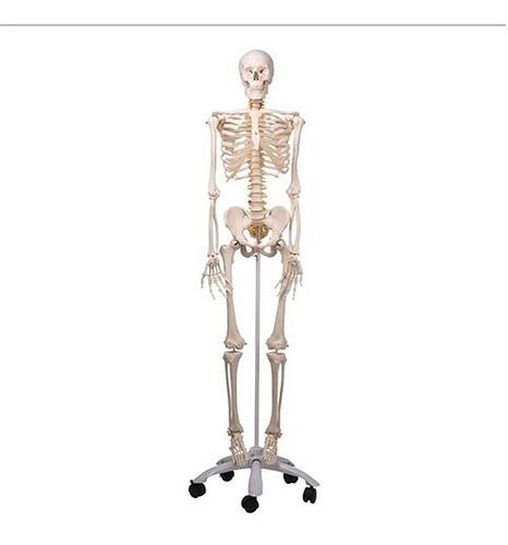 Esqueleto Humano Mini 80 Cm Alto