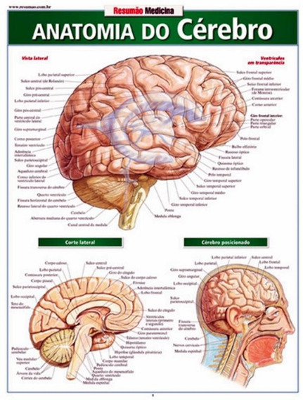 Resumao - Anatomia Do Cerebro