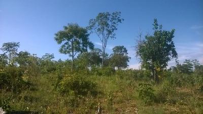 Sitio Com 4,8 Hectares Em Jequitibá - 22klm De Sete Lagoas -bom De Água -06 Klm De Terra - 2321