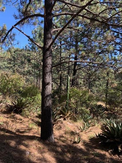 Terreno Venta Oportunidad Bosques De Monterreal, Arteaga Coahuila | Terreno Campestre En Venta