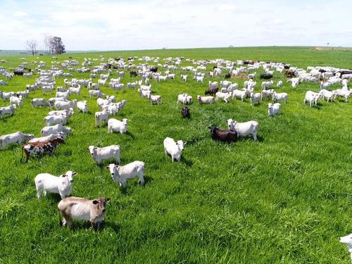 Imagem 1 de 30 de Fazenda À Venda Em Echaporã/sp - Fa00113 - 68992877