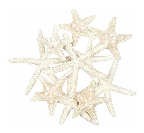 Imagen 1 de 2 de Jangostor - 10 Estrellas De Mar De 2 A 6 Pulgadas Mixtas De