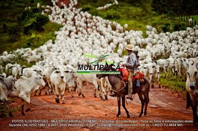 Fazenda Prata Mg Para Gado Pecuária 537 Hectares - 122