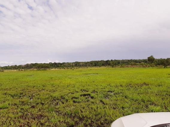 Fazenda Em Pium To - 517