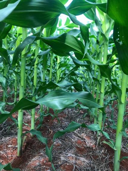 Fazenda A Venda Para Agricultura Em Formoso Do Araguaia-to - 1162