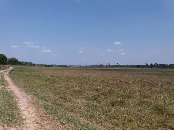 Fazenda: 214 Alqueires