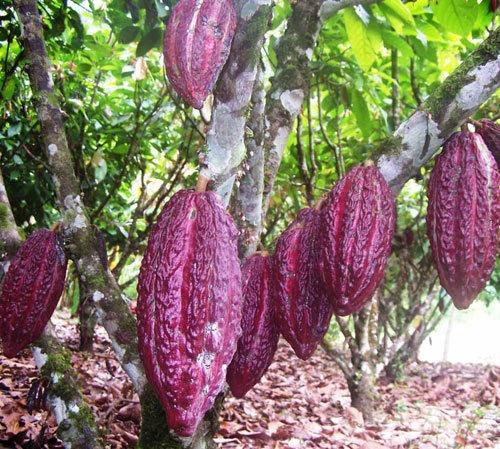 Venta De Terreno Con 12 Hectáreas De Cacao