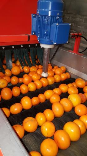 Lavadora De Frutas