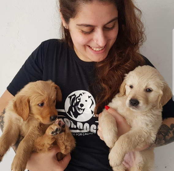Filhote Golden Retriever Com Pedigree Cbkc