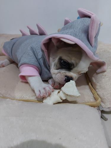 Imagem 1 de 4 de Cachorro Bulldogue Francês
