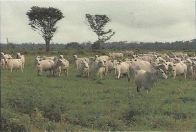Arrendamento De Vacas No Estado De Mato Grosso Do Sul - 941