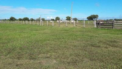 Fazenda A Venda Em Aquidauana - Ms (pecuária) - 947