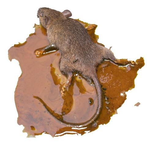 Ratoeira Adesiva Cartela Pega Rato Camundongo - 48un