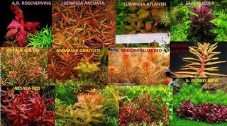 Plantas Acuaticas Exoticas