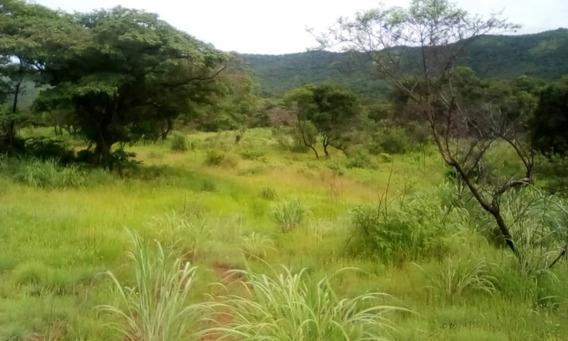 Finca En Venta Sector Las Lajitas Guarico 04144748721