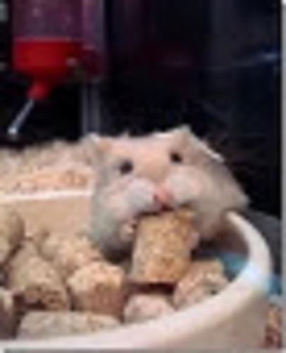 Alimento Extruido Para Hamster  Barratisimo 5 Kilos