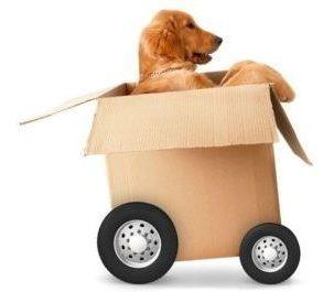Transporte De Mascotas A Todo El País.