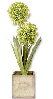 Plantas Artificiales Allium Decorativas Maceta Madera