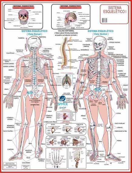 Mapa Do Corpo Humano Sistema Esqueletico I 120x90cm