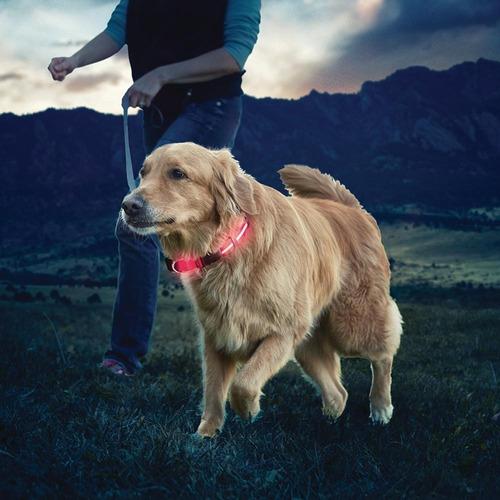 Collar Led Mascota Perro Gato Paseo Seguridad Talle Xl  L220