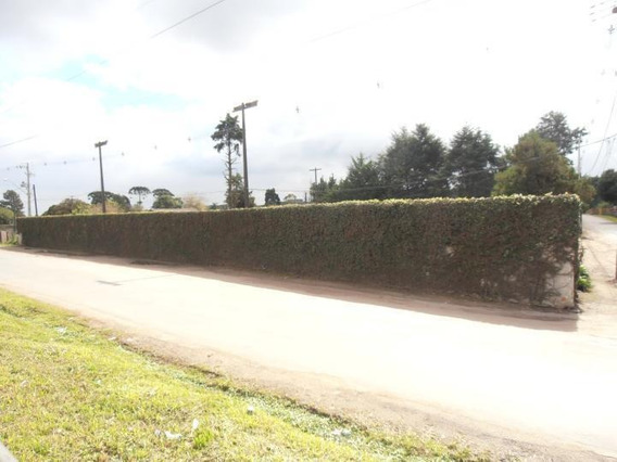 Terreno Para Venda Em São José Dos Pinhais, Borda Do Campo - Te-052_2-490311
