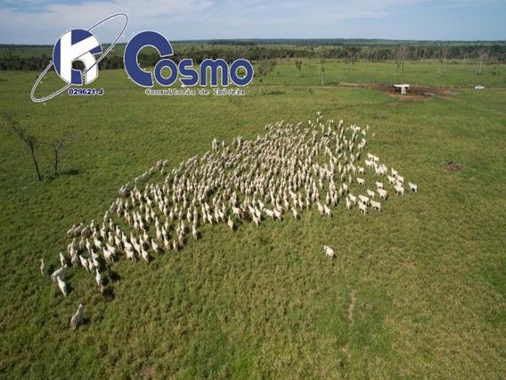 Fazenda, Com Pastagem Formada, A Venda Em Tocantins 180 Km De Palmas - Fa00014 - 32266265