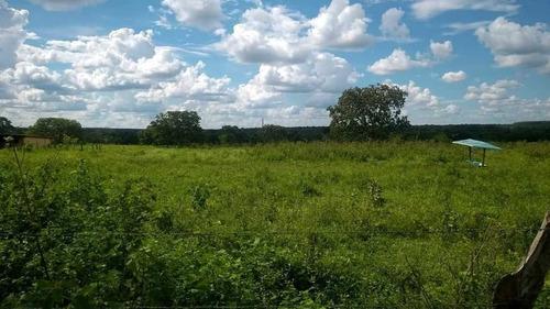 Imagem 1 de 30 de Fazenda  De Gado E Graõ Com 455 Hectares Curvelo - 36426