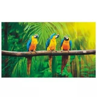 Adesivo Decoração De Parede Zoológico Pet Shop Arara Pássaro